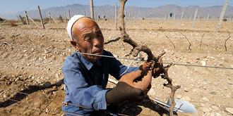 见证葡萄种植的艰辛