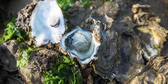 遍地生蠔無人吃的海島