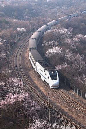 实拍:居庸关列车穿行花海