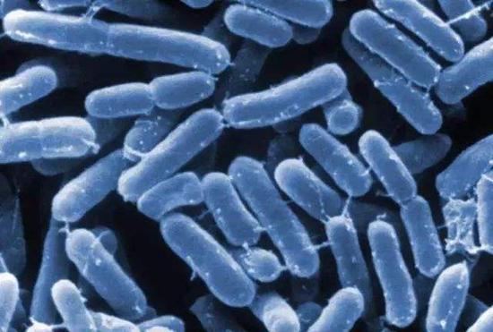 电镜下的阪崎肠杆菌
