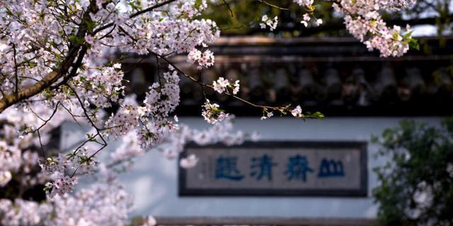太湖鼋头渚的樱花季美哭了