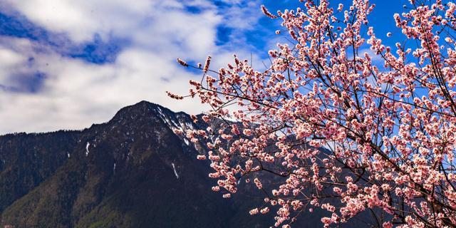 这里有全中国最美的春天