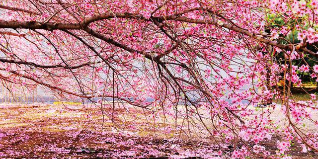植物园春花姹紫嫣红