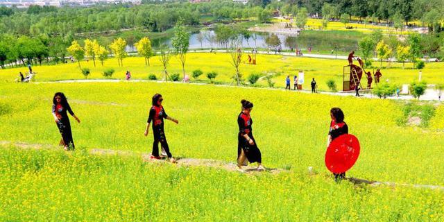北京醉美油菜花梯田
