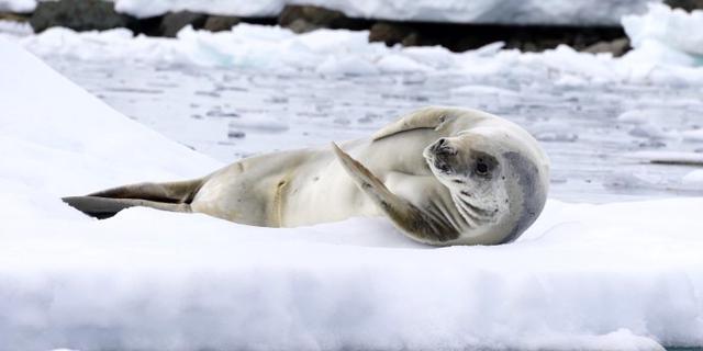 来南极半岛探个险