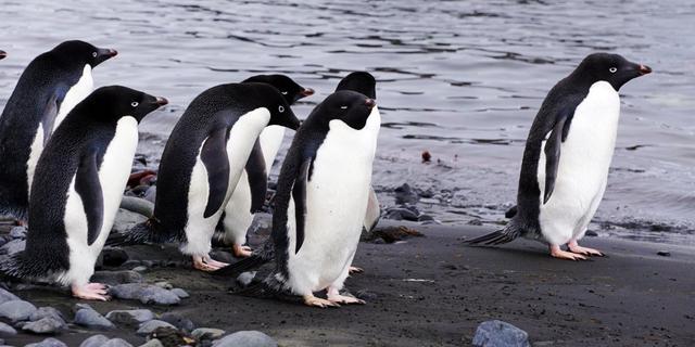 去南极看萌萌的企鹅