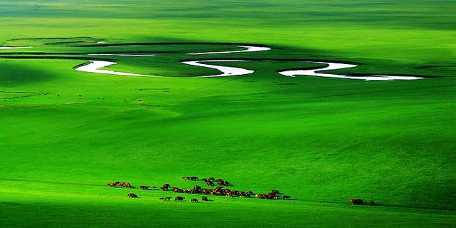 呼伦贝尔大草原沁人心脾的绿
