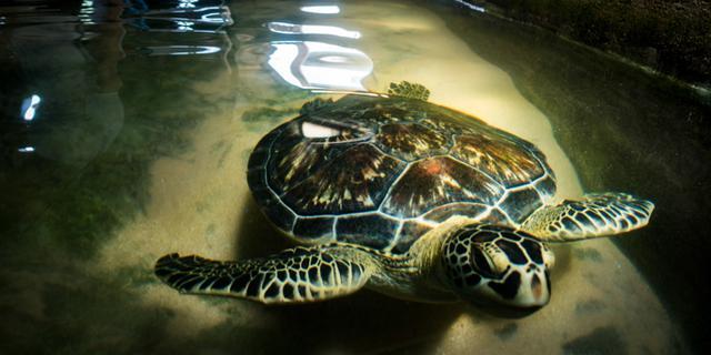 与海龟的一次亲密接触