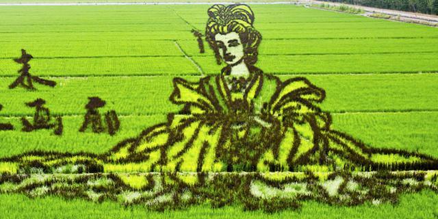 """在稻田中""""种""""出来的艺术品"""