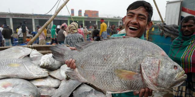 孟加拉鱼市让人大开眼界