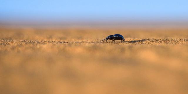 戈壁荒漠中藏匿的美景