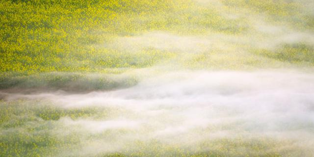 晨雾中的罗平油菜花海