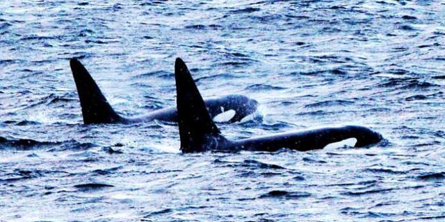 北极圈观鲸