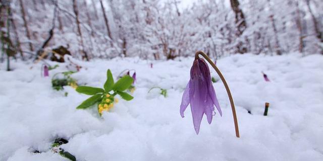 暮春的长白山下了一场大雪