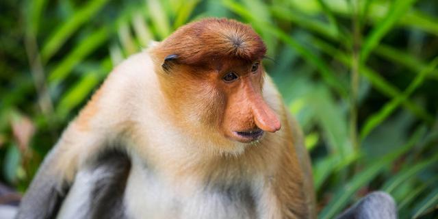 世界最帅的猴24小时金枪不倒