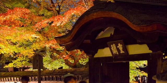 京都的另一种「枫」情