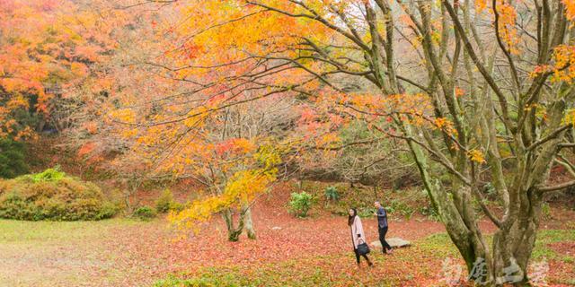 踏着红叶,走进秋天里