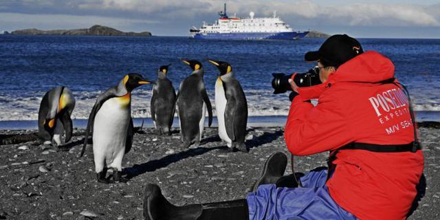 在南极被企鹅围观是啥体验
