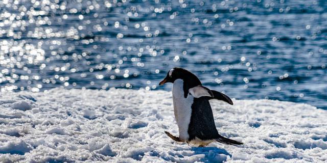 到南极去看企鹅