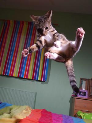 英国铲屎官拍下猫咪各种跳跃照