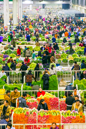 中国最大花卉市场,卖花像卖菜