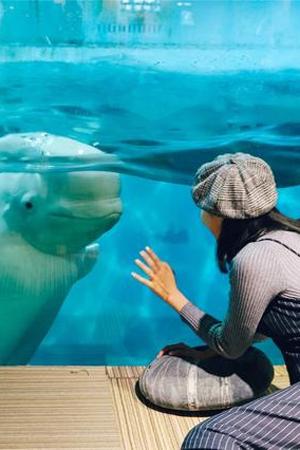 在这里能看着白鲸喝咖啡