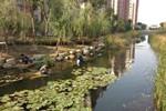 太湖街道求索水环境长治久清之道 还百姓一河清流