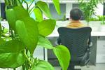 功能绿植受无锡市民追捧 专家:摆放不宜多