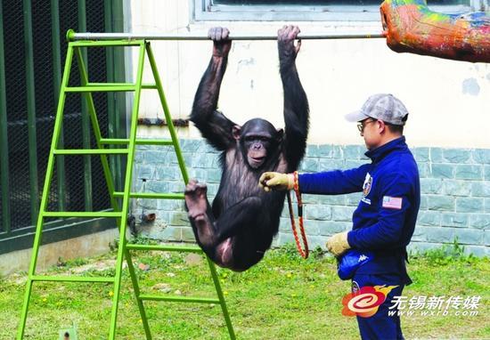 无锡动物园狂欢节下月开启