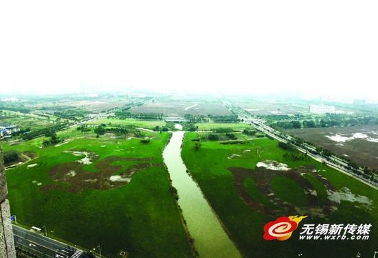 新吴区环境综合整治 百万平方米花海迎物博会