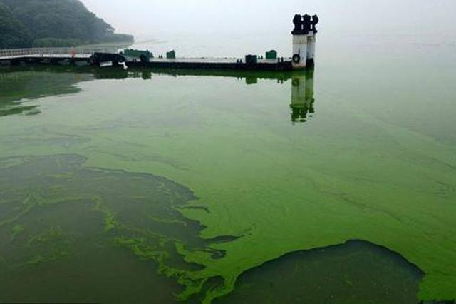蓝藻变身鞋垫原料出口 今年已打捞藻水80.1万吨
