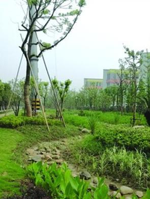 滨湖区首次引入海绵城市项目