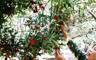 锡城水果体验式采摘受欢迎