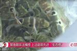"""【想不到】禁渔期非法捕捞  上庭前法院先让被告""""恢复生态"""""""