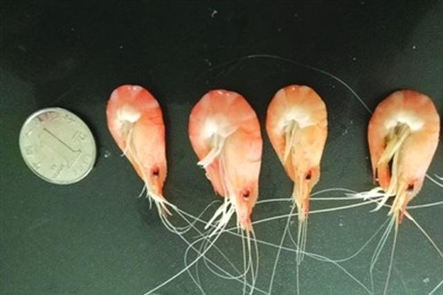 太湖已禁捕 市场上为何还售卖大量白虾?