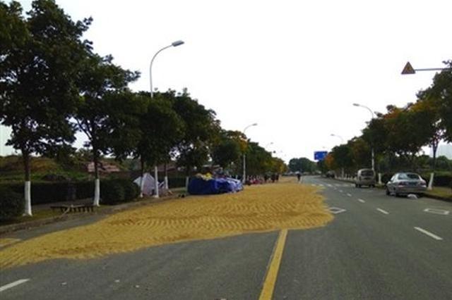 马路又成晒谷场 安全隐患多