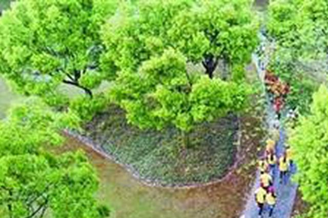 """宣传低碳环保两省四市志愿者""""益行""""无锡"""