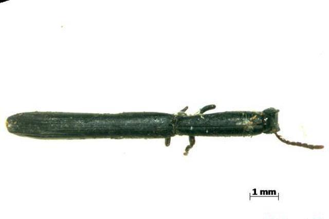 南京海关查获多种进境害虫 有两种为全国首次查获