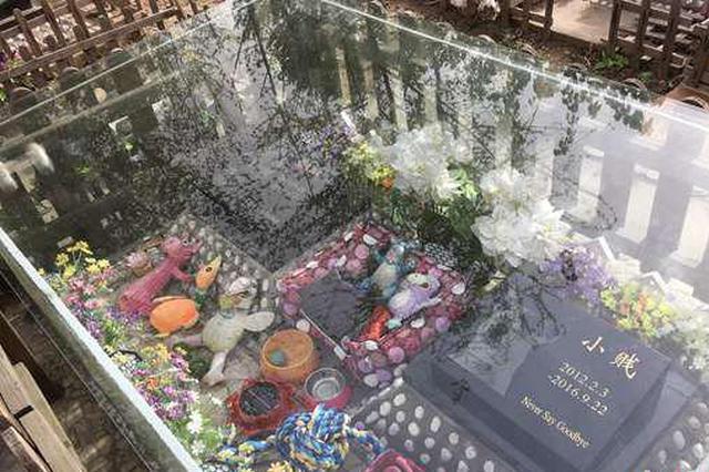 宠物墓地为何受捧:价格2000元起 墓碑等费用另计