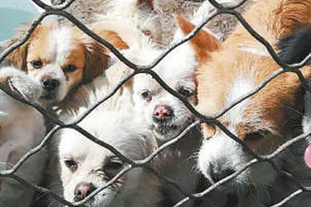 流浪犬问题待解:多地加强收容管理 避免再度遗弃