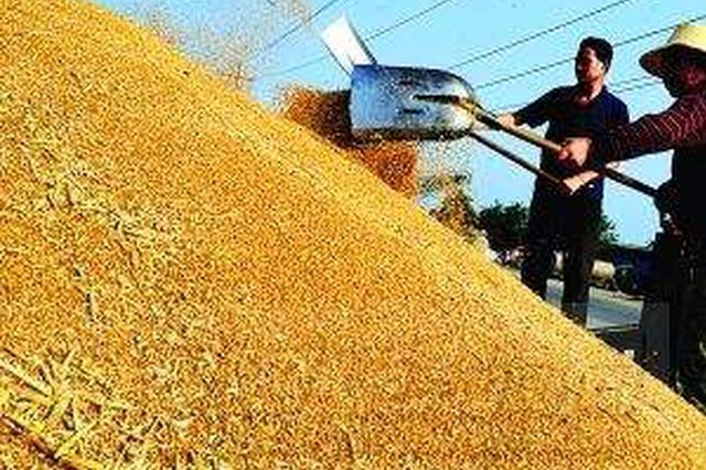 江苏托市收购夏粮170万吨 助农民增收近2亿元