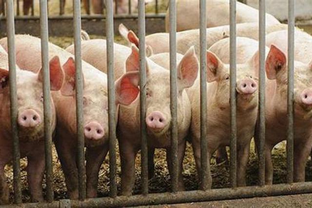 """应对""""海州区非洲猪瘟疫情"""" 江苏部署落实综合防控措施"""