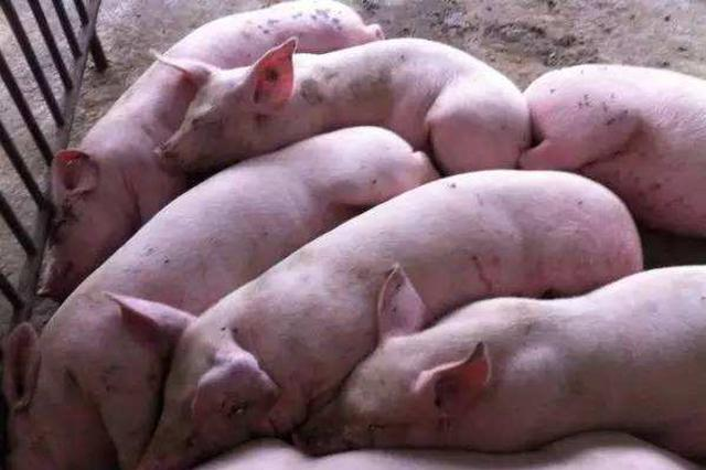 宜兴一女子因散布猪瘟不实信息被依法查处
