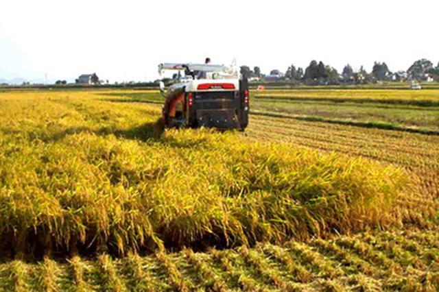产业结构调优 江苏调减低效粮食作物200万亩
