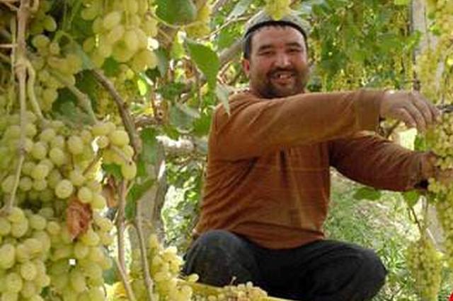 江苏:精准扶贫让新疆人民更有获得感
