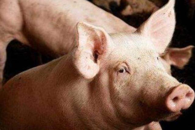 宜兴非洲猪瘟疫区解除封锁