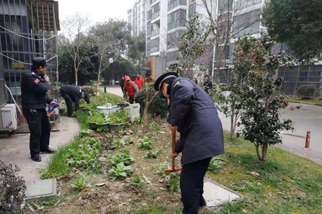 城管社区齐发力 毁绿种菜被清理