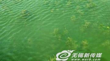"""太湖""""种""""出""""水下森林"""""""
