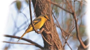 无锡有记录鸟类超过350种