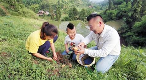 一家人开心挖土豆。